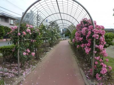 rose_ichikawa11