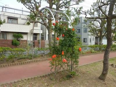 rose_ichikawa12