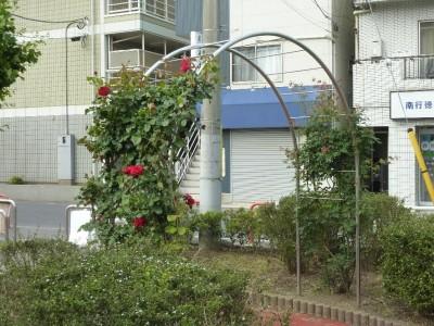 rose_ichikawa13