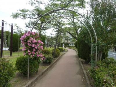 rose_ichikawa6