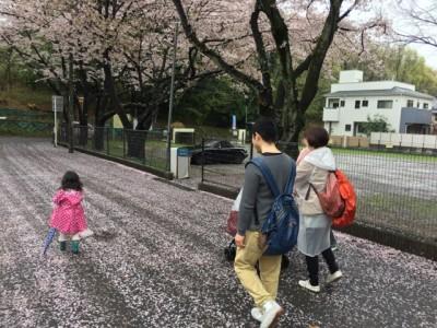 21_sakura carpet